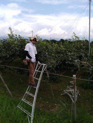 柿摘花、さらら農園